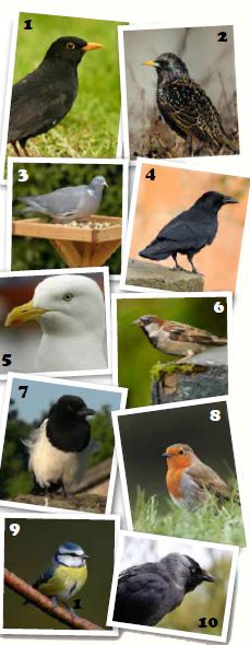 common uk birds