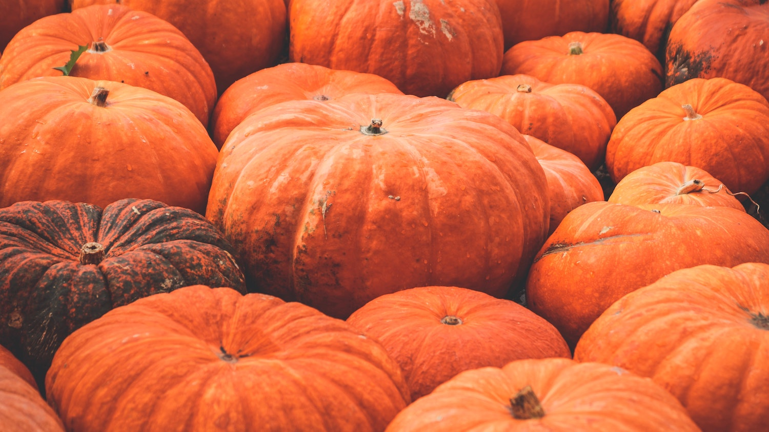 save pumpkin reduce waste