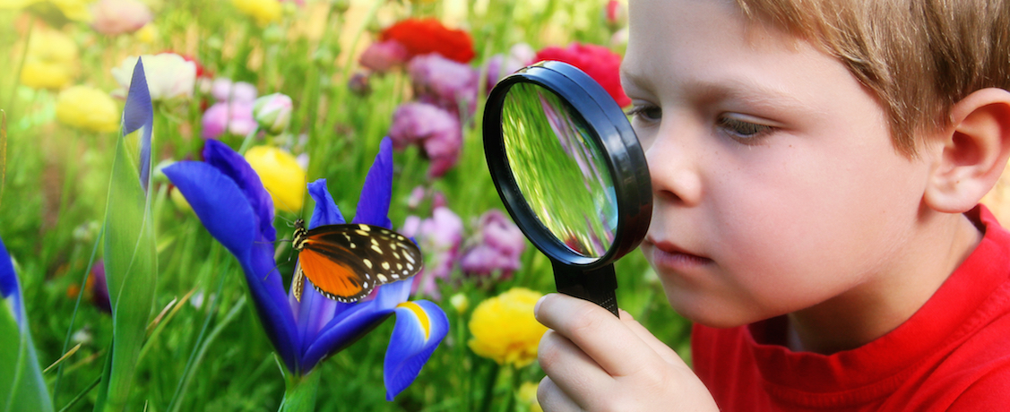 Child inspecting a butterfly