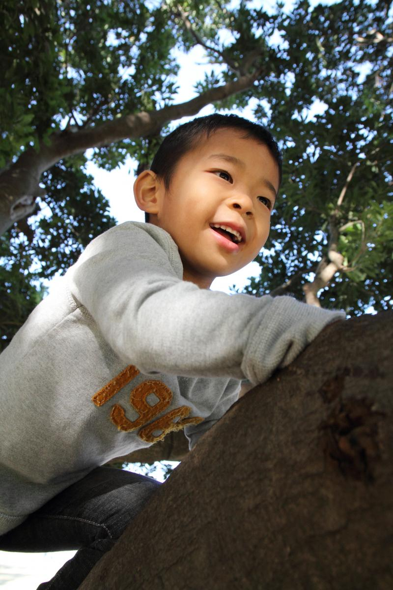 young boy climbs a tree