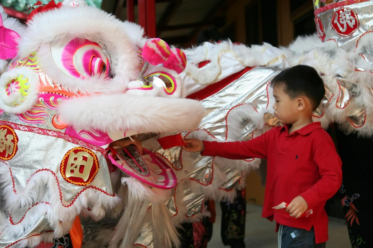 a boy feeds a Chinese Lion to bring good luck