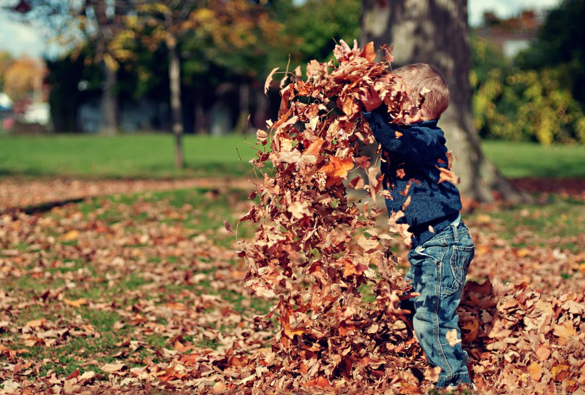 a young boy plays in leaves