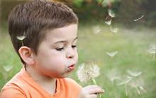 child dandelion cost of childcare